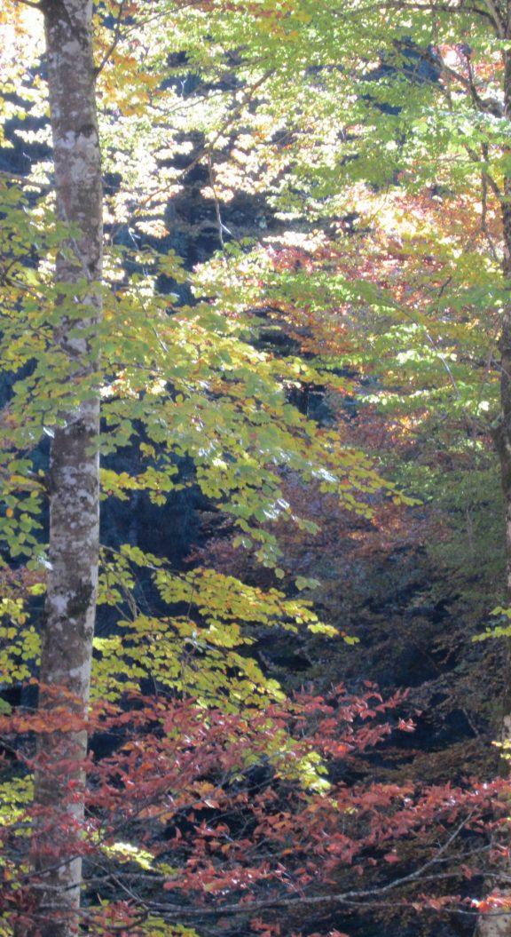 foto 2. gli alberi